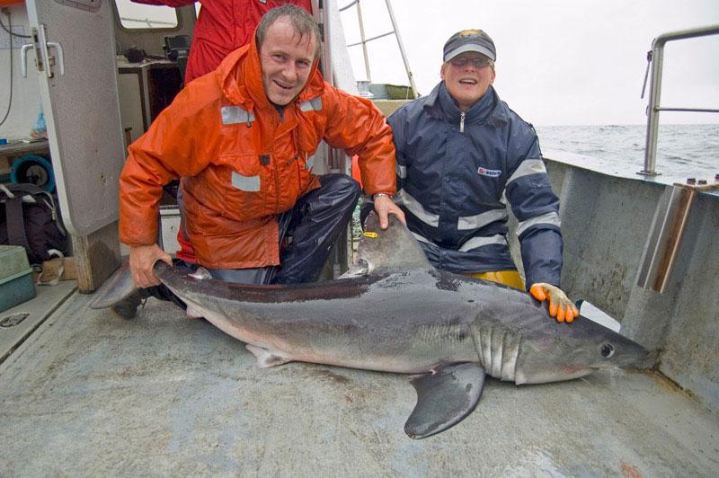 species ID porbeagle shark