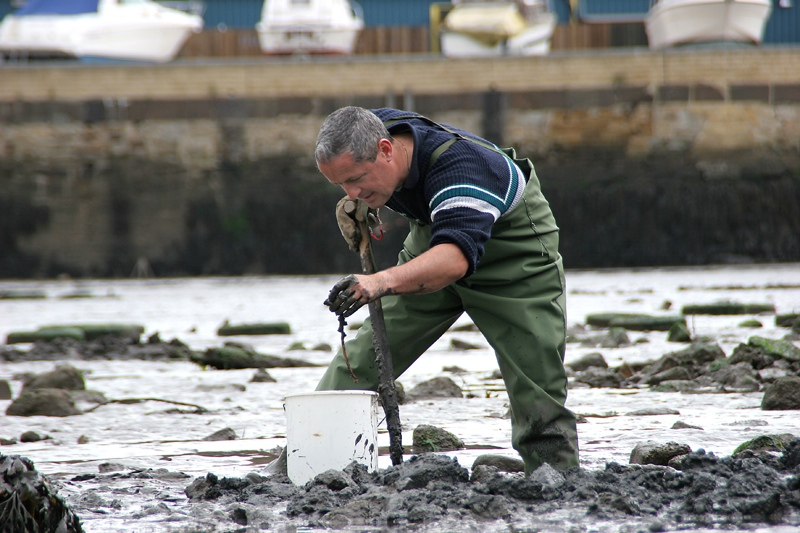 bait digger in mud for ragworm