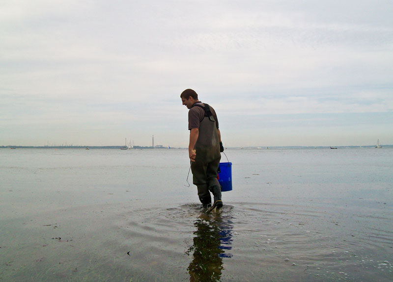 wading and searching for spider crab