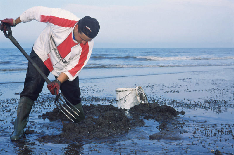 Steve digging an exposed beach for white ragworm