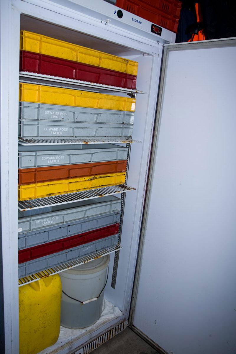 firdge with trays for white ragworm storage