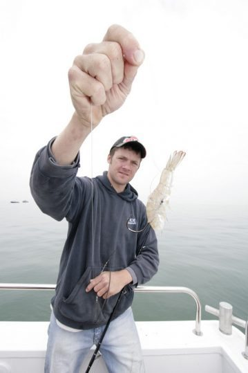 a prawn bait for smoothhounds