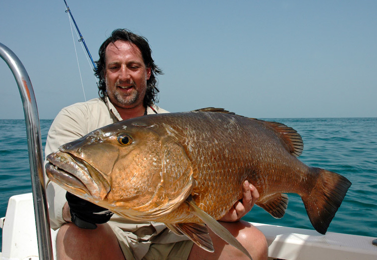a grouper from Guinea-Bissau