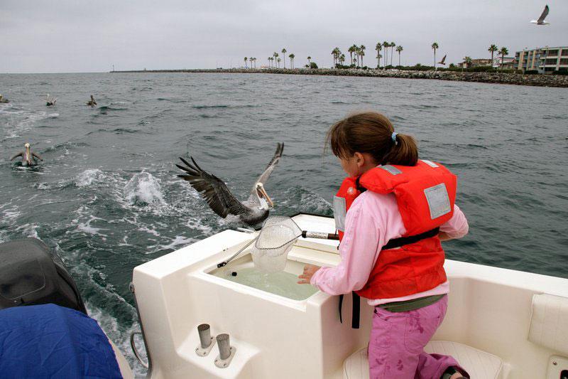 Bronwyn feeding the pelicans