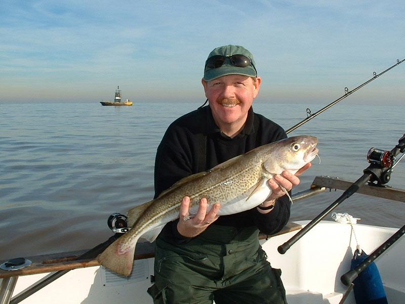 a cod taken on squid fished uptide