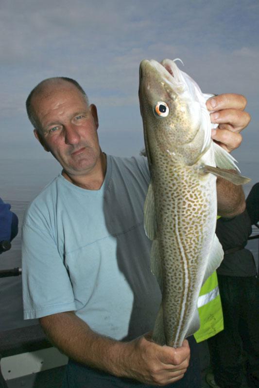 a nice clean cod