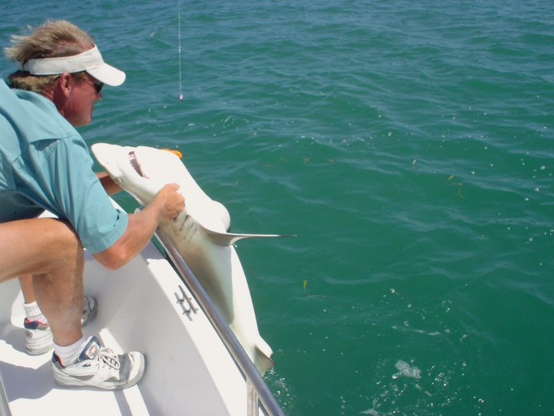 the skipper hauls a spinner shark aboard