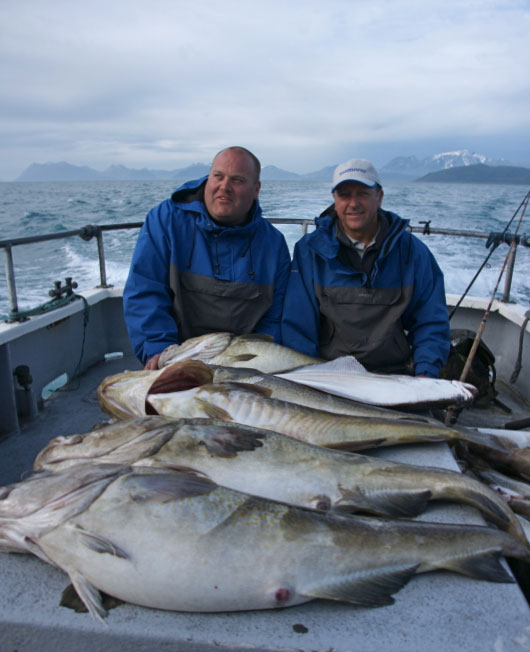 a catch of cod displayed at the end of the day in Norway