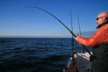 fighting a fish on a Daiwa 3-piece Kenzaki Braid Special boat rods