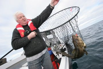 a nice Orkney cod in the net