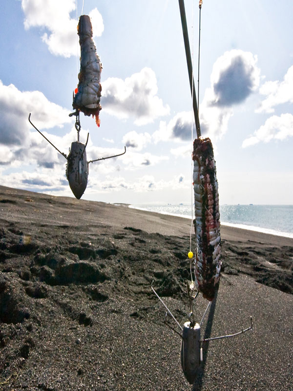 two big baits for spurdog in Iceland