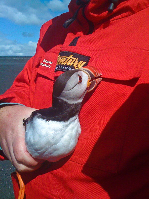 Steve cradles a puffin in Iceland