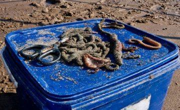 a selection of baits for Elliot beach flounders