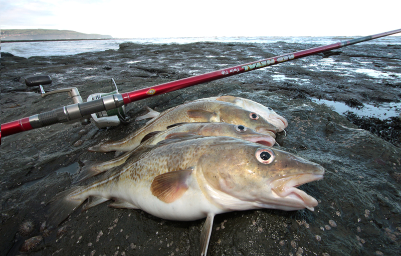 a line of YOurkshire cod on the rocks with rod