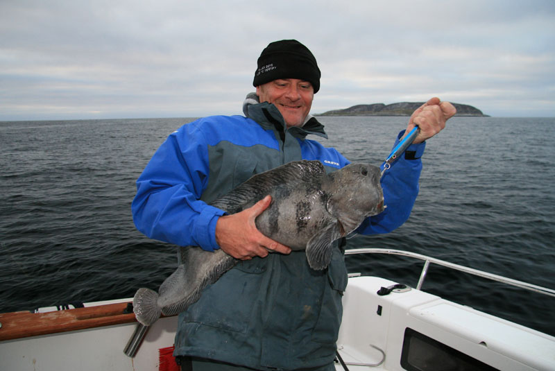 a quality cat fish or wolffish from Norway
