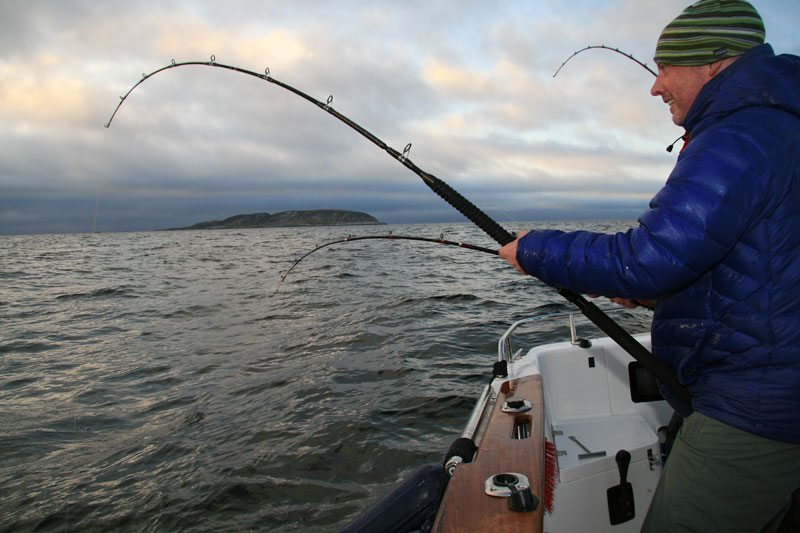 a rod bends under the strain from a halibut