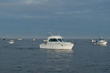 Baitbox Humber Cod Open 2012 boats