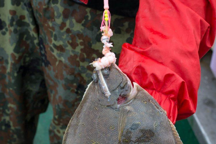 plaice fishing Faroe Islands dab