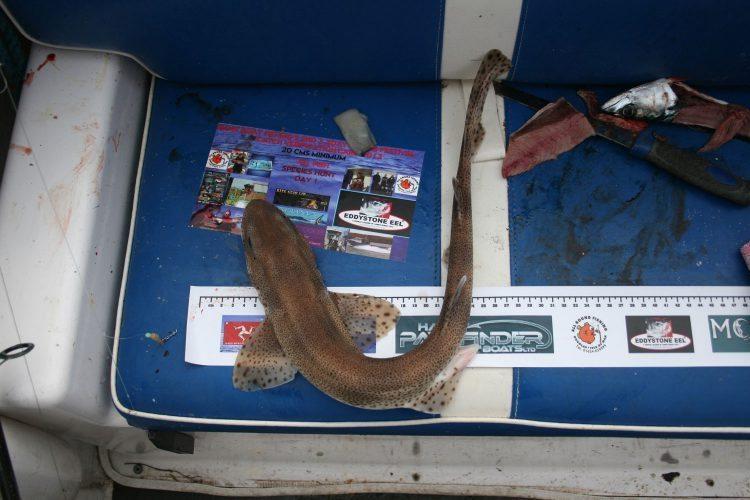 manx fishing festival dogfish