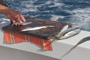 mexico fishing ballyhoo bait