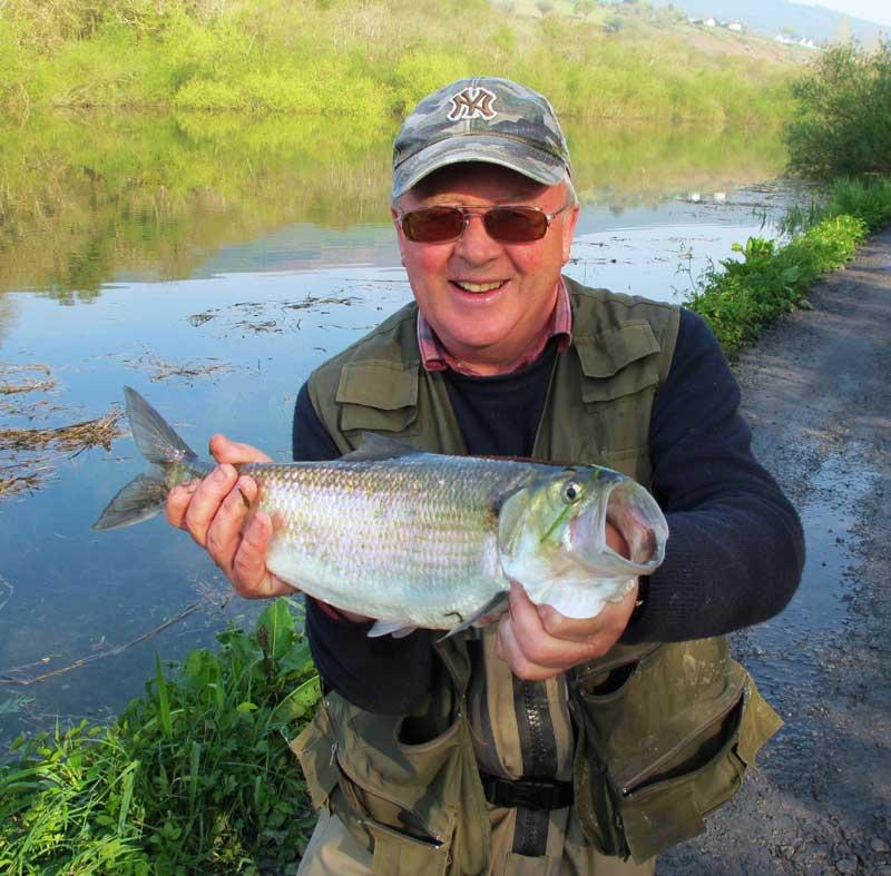 An Irish Angler's Year shad
