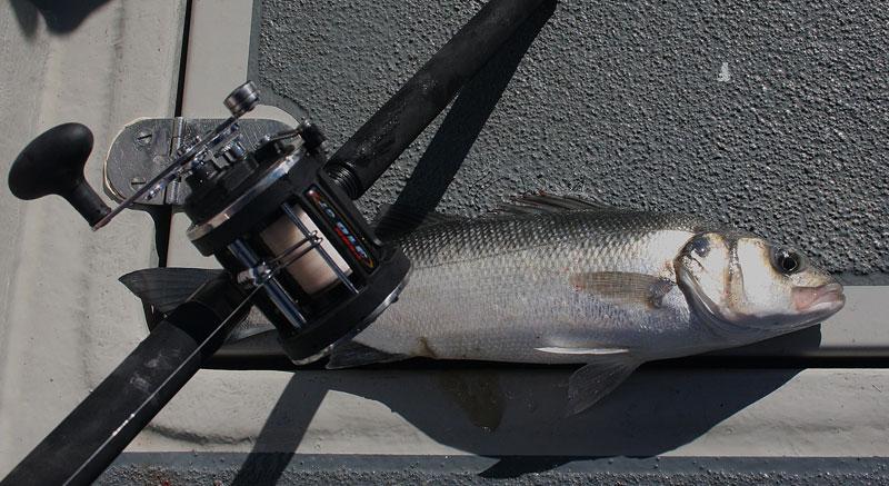 a bass from Portland Race