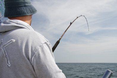 a fish on the Abu Suveran Evo 20lb boat rod