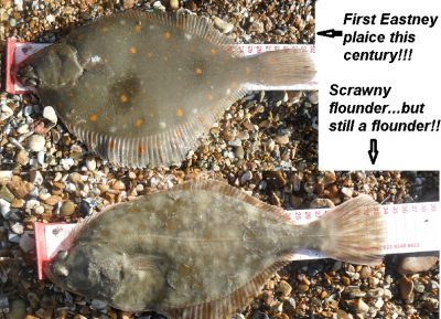 Golds Beach Missions flounder