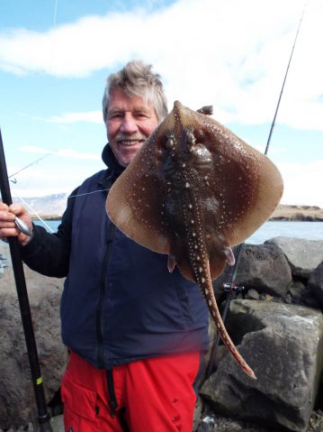 shore fishing Iceland Dave with a starry ray