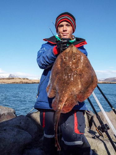 shore fishing Iceland Oliver with his record starry ray