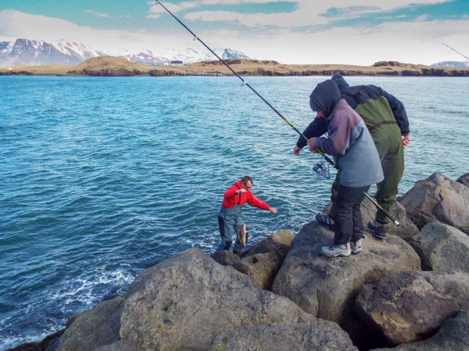 shore fishing Iceland landing a cod