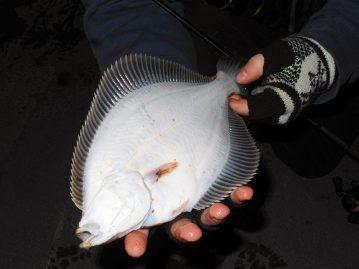 LRF Winter Flounder fish underside