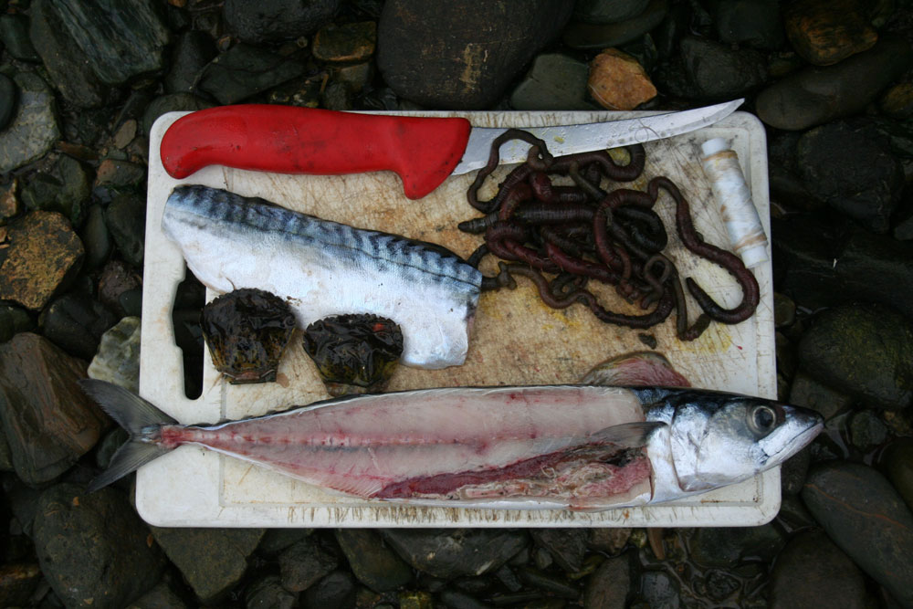 a selection of baits for flounder