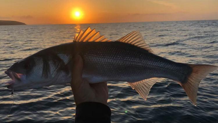 lure caught bass at sunrise