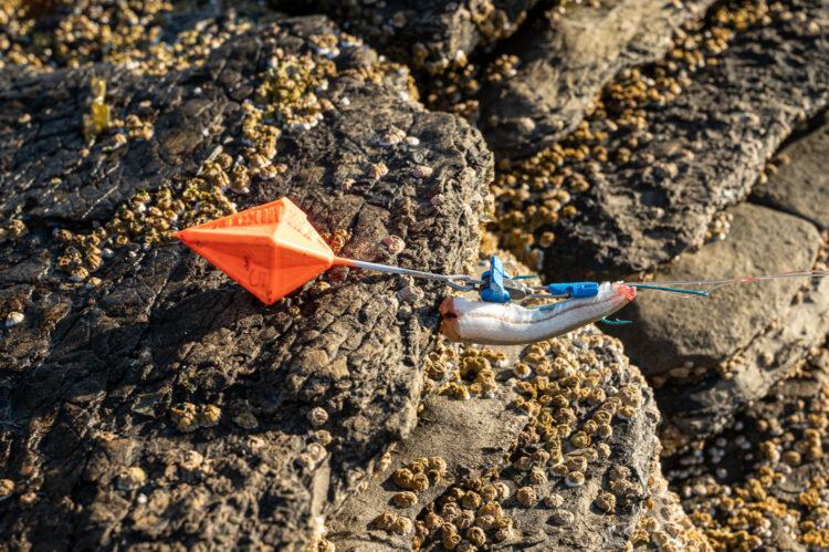 Trident bait clip