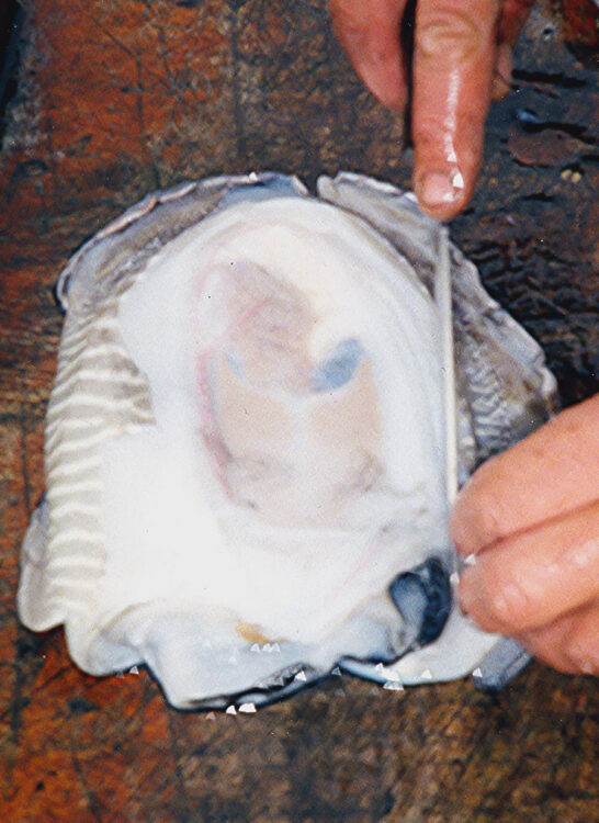 cuttlefish bait step 5