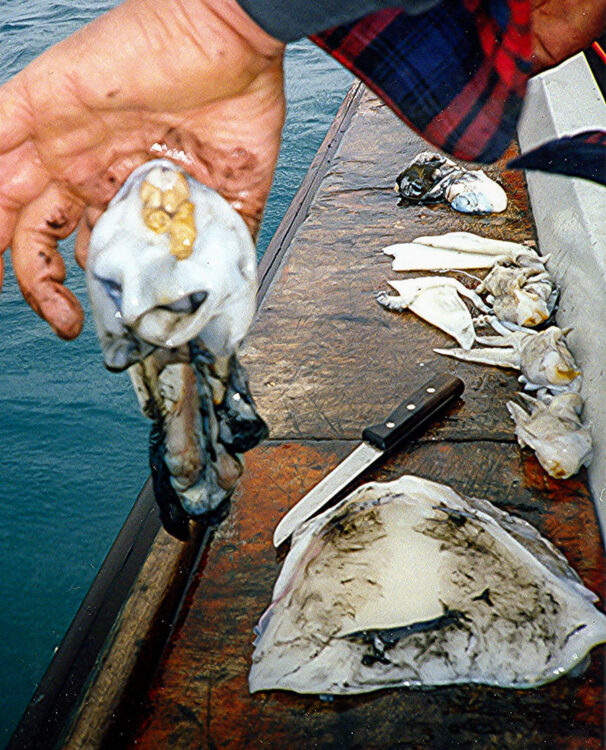 cuttlefish bait step 8