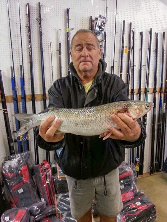 Alan Taylor with a 3lb mullet caught on a ragworm bait while fishing on the beach beside Walton Pier