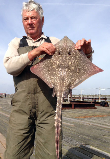 Peter Binks with a typical size thornback ray