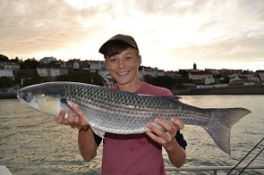 Thin-lipped mullet