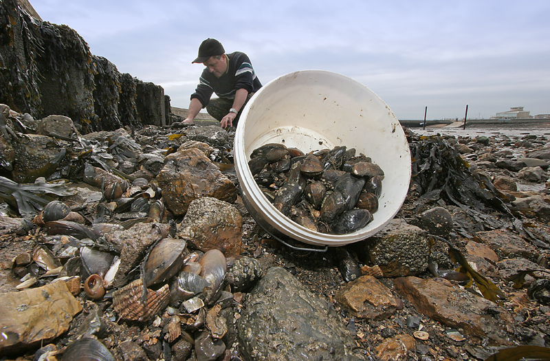 a bucket with gathered mussels