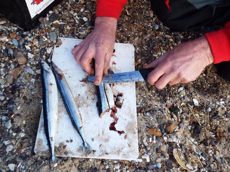 Preparing a bluey for Essex thornback ray