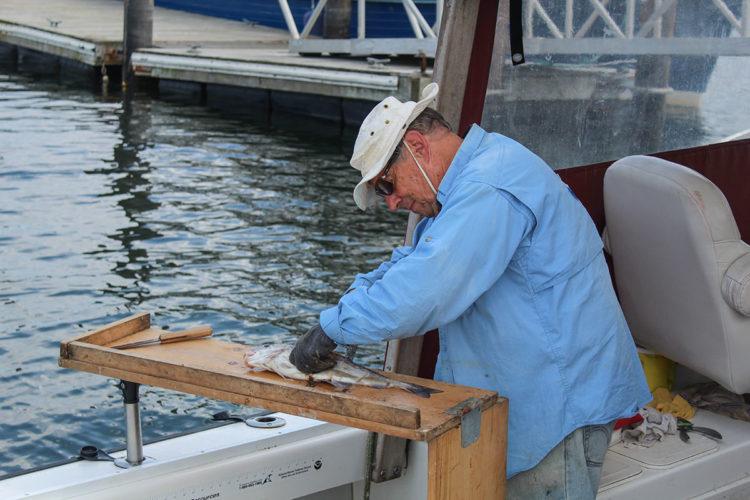 Capt. Don filleting fish