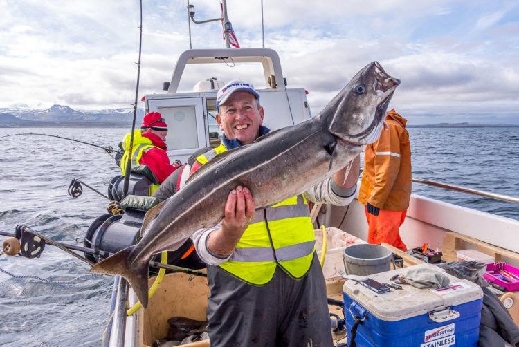 Typical Olafsvik coalfish