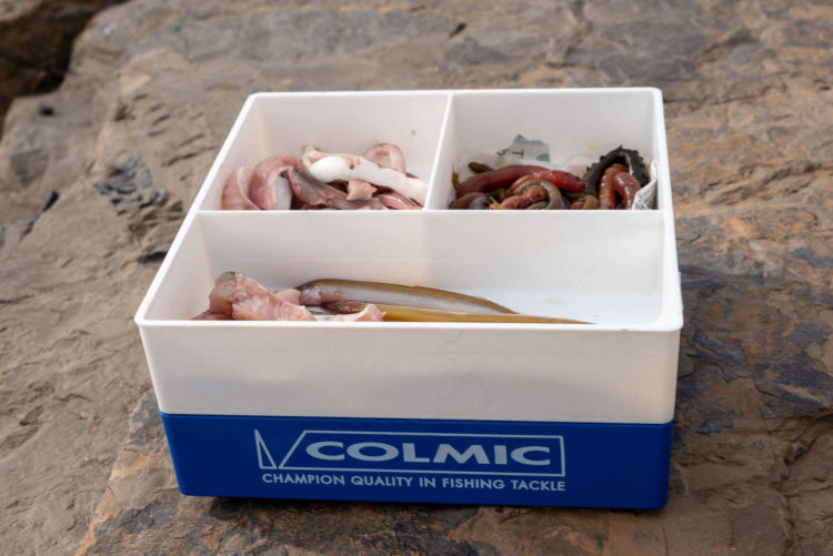 the Colmic Bait Box Cooler with bait